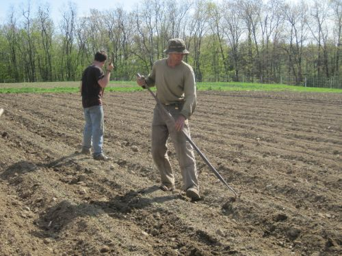 Anthony and Josh stay on top of eagerly germinating weed seedlings