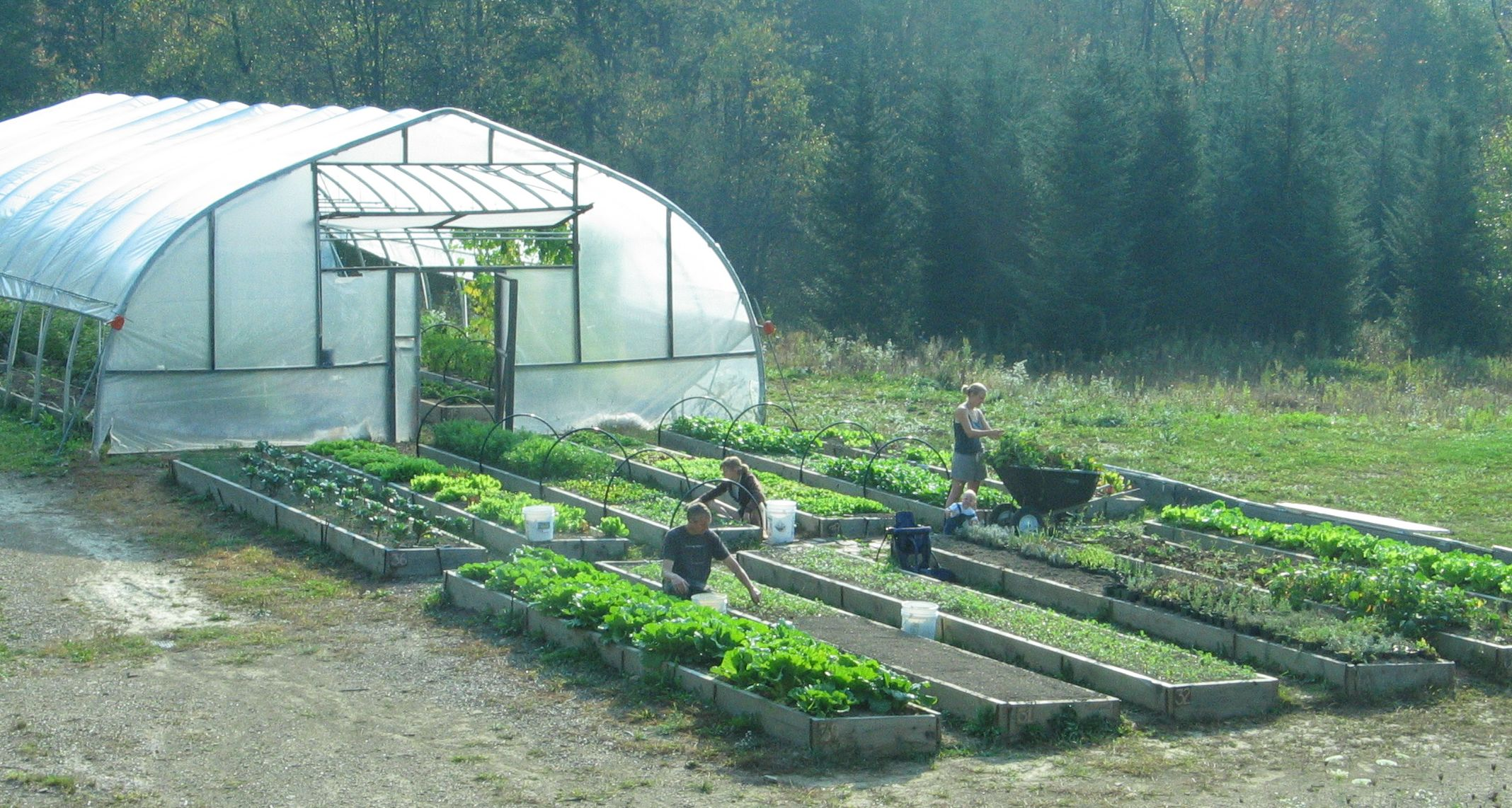 Nature S Pace Organics Certified Organic Vegetables