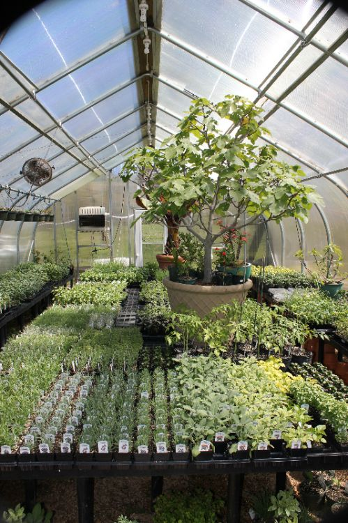 Full Greenhouse