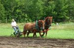 Don plowing the new field with Rose and Chelsea