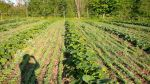 The winter squash block in spring...the crimson clover has just started to grow