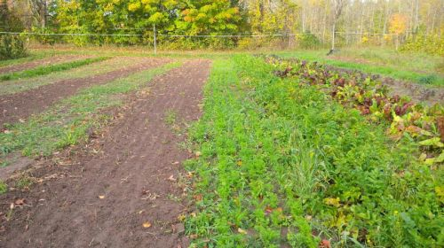 The cucumber block in fall...carrots, spinach and other crops for overwintering