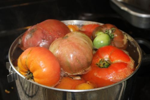 preparing tomatoes for sauce