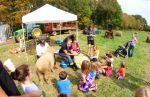 OxFest sheep demo