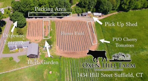 Suffield farm parking and PYO