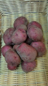Red Potatoes, 3#
