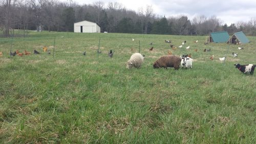 Pasture Raised at Bradshaw Family Farm