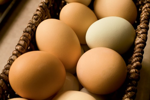 Pastured Eggs (GMO-free) 1 Dozen