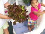 Grand-daughter with Red Sails lettuce