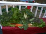 Winter Dec, 18th CSA
