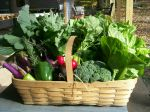 Winter Share CSA