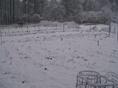 Georgia? Garden snow covered