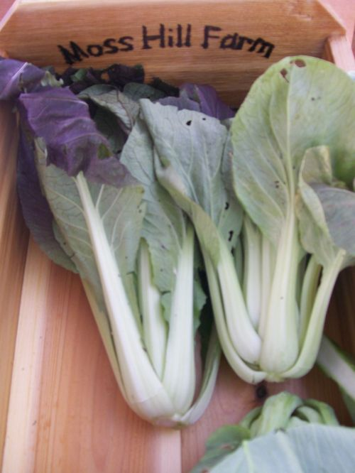 Pac Choi in May