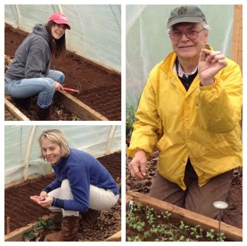 Planting in Hoop house
