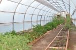 Kelly's Greenhouse