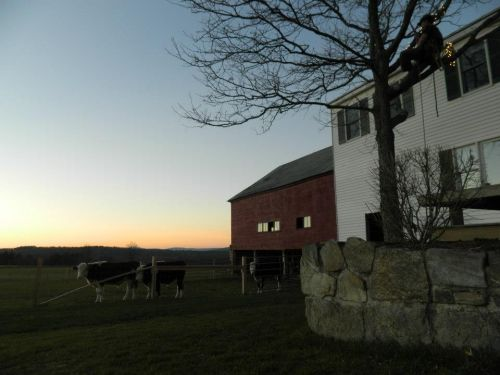 A view of the farm at sunset
