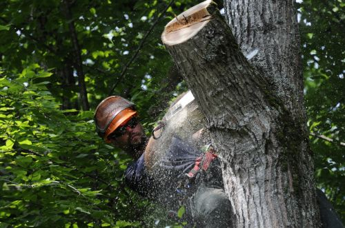 Tree Care - Tyler at work