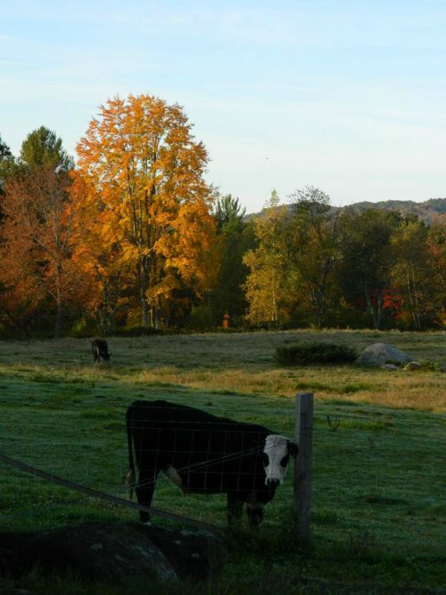 grazing on fall pastures