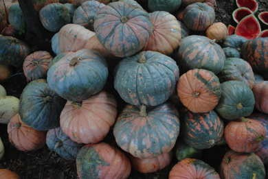 Seeds: Candy Roaster Squash