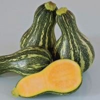 Seeds: Green Striped Cushaw Squash