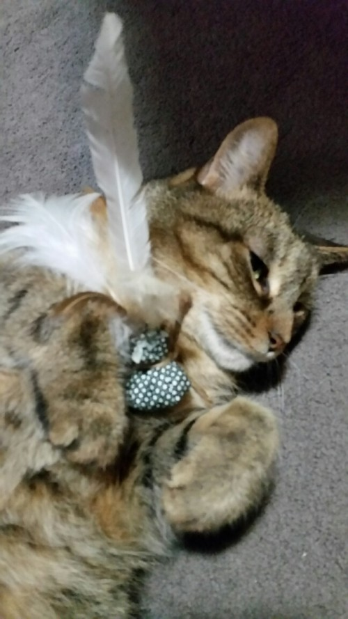 Catnip Feather Toy