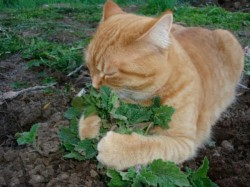 Dried Catnip For Your Favorite Feline