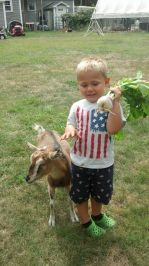 turnip and a boy and his goat named turnip