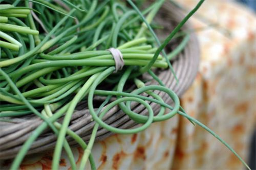 Garlic scapes are ready around the first of June.