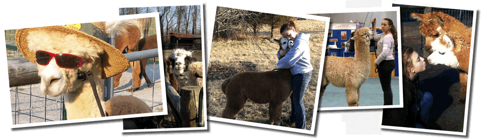 Hart-So-Big Alpaca Farm