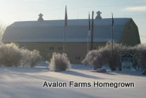 Avalon Farms in Winter
