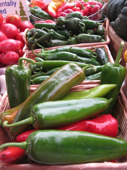 Oh, the bounty of peppers!