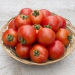 Tomato (Saladette) Red Racer HM