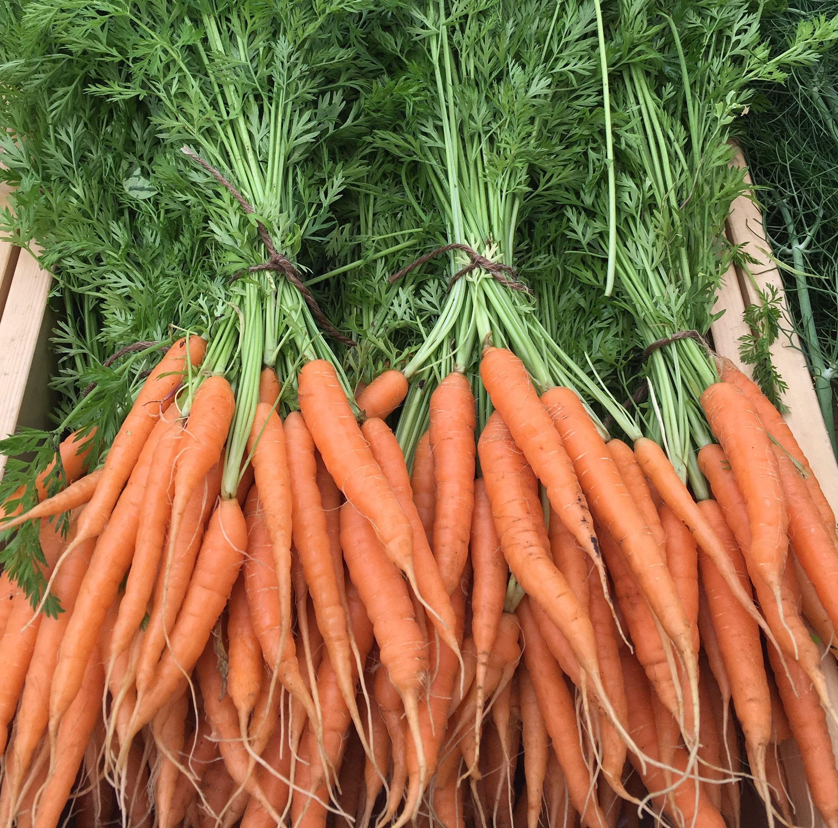 Carrots: Catalina Sweet, with tops