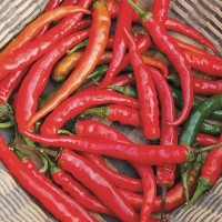 Peppers (hot): Cayenne