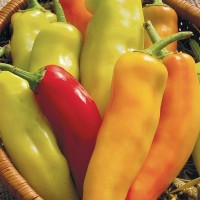 Peppers (hot): Hungarian Hot Wax