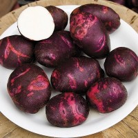 Potatoes: Purple Viking