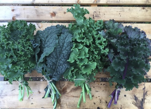 Kale: assortment