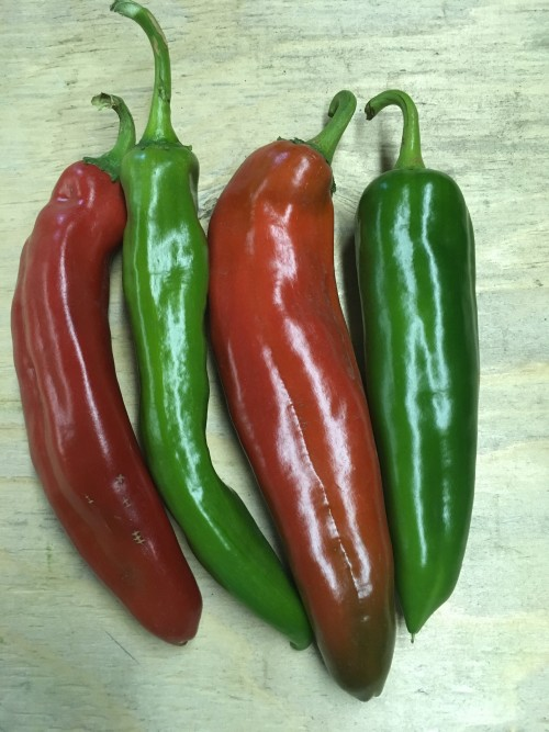 Peppers (hot) Nu Mex Joe E Parker