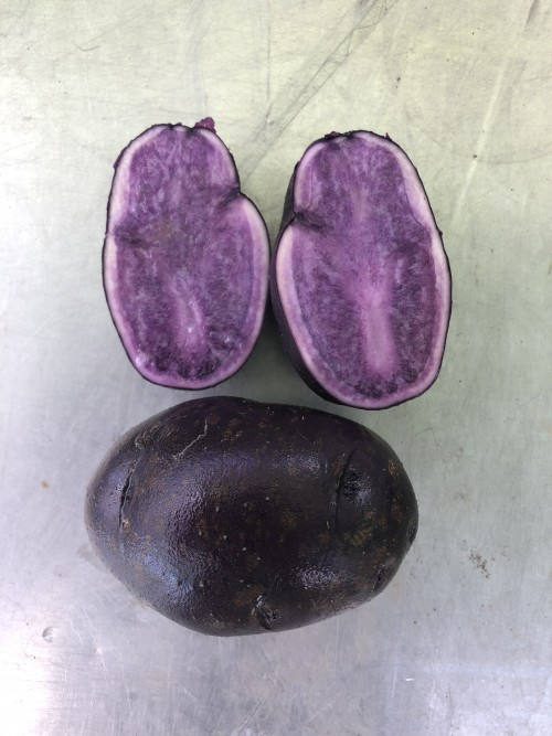 Potatoes Royal Purple (ours)