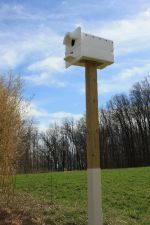 Owl nesting box at the farm.