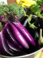 Asian and Italian eggplants at our on farm market stand.