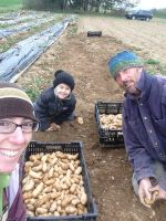 Harvesting fingerling potatoes as a family.