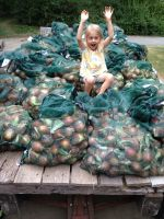 Ginger with about 2000 pounds of sweet onions!