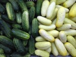 Mixed pickling cucumbers.