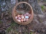 What a beautiful basket of eggs!