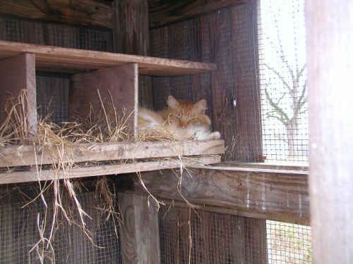 Fluffy napping in a nesting box