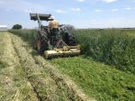 Tractor Mowing Rye Cover Crop
