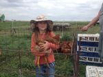 Helping out with Pastured Chickens