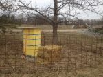 Honey Bees Arrive at New Farm
