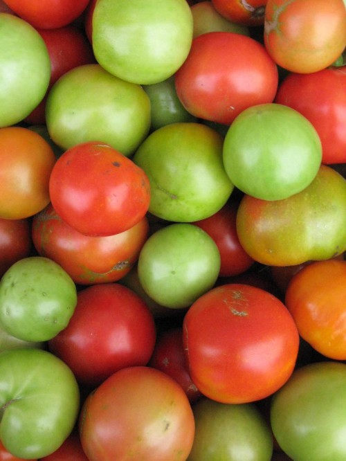 Green and Red Tomatoes